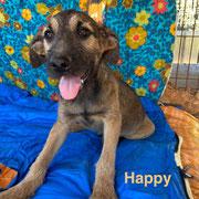 1 Tier in Rumänien durch Namenspatenschaft Happy, Pro Dog Romania eV