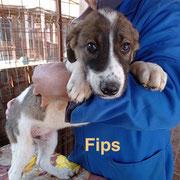 1 Tier in Rumänien durch Namenspatenschaft Fips, Pro Dog Romania eV