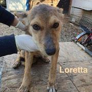 1 Tier in Rumänien durch Namenspatenschaft Loretta, Pro Dog Romania eV