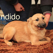 1 Tier in Rumänien durch Namenspatenschaft Bandido, Pro Dog Romania eV