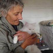 2 Kater, 2 Katzen in Svetlanas Tierheim/Sibirien, Tierhilfe Bluemoon eV