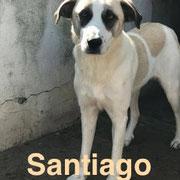 1 Tier in Rumänien durch Namenspatenschaft Santiago, Pro Dog Romania eV