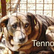 1 Tier in Rumänien durch Namenspatenschaft Tenno Pro Dog Romania eV