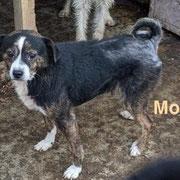 1 Tier in Rumänien durch Namenspatenschaft Mojito, Pro Dog Romania eV