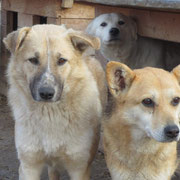 3 Hunde im Tierheim Ploiesti, Rumänien über Pro Dog Romania eV
