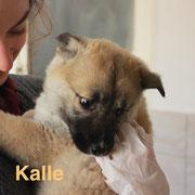 1 Tier in Rumänien durch Namenspatenschaft Kalle, Pro Dog Romania eV