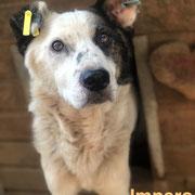 1 Tier in Rumänien durch Namenspatenschaft Impero, Pro Dog Romania eV