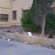 7 Katzen, 3 Kater, Katzenhilfe Olli eV für Malta