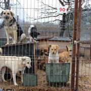 5 Hunde in Rumänien über Pro Dog Romania eV