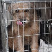 12 Tiere in Tantava/Rumänien über Carmen Dodi