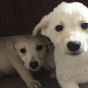 2 Tiere in den Schlupfwinkeln Moldawien über Stimme der Tiere eV