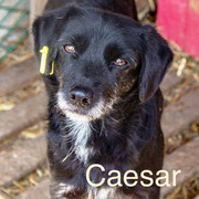 1 Tier in Rumänien durch Namenspatenschaft Caesar Pro Dog Romania eV
