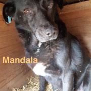 1 Tier in Rumänien durch Namenspatenschaft Mandala, Pro Dog Romania eV