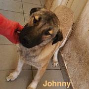 1 Tier in Rumänien durch Namenspatenschaft Johnny, Pro Dog Romania eV