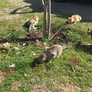 6 Katzen in Duaci über Tierfreunde Antalya