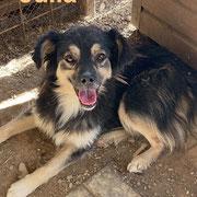 1 Tier in Rumänien durch Namenspatenschaft Julia, Pro Dog Romania eV
