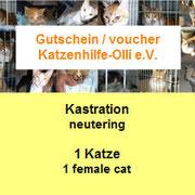 1 Katze auf Malta durch Katzenhilfe Olli eV