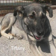 1 Tier in Rumänien durch Namenspatenschaft Tiffany, Pro Dog Romania eV