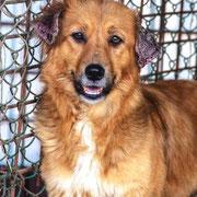 1 Tier in Rumänien durch Namenspatenschaft Leandra Pro Dog Romania eV