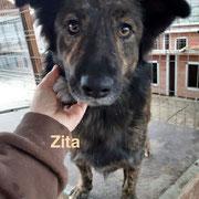 1 Tier in Rumänien durch Namenspatenschaft Zita, Pro Dog Romania eV