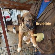 1 Tier in Rumänien durch Namenspatenschaft Brunhilde, Pro Dog Romania eV