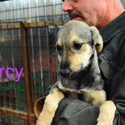 1 Tier in Rumänien durch Namenspatenschaft Mercy, Pro Dog Romania eV