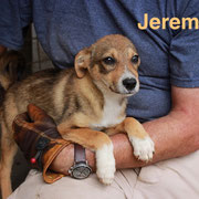 1 Tier in Rumänien durch Namenspatenschaft Jeremiah, Pro Dog Romania eV