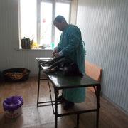 3 Rüden und 5 Hündinnen in den Schlupfwinkeln Moldawien