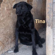 1 Tier in Rumänien durch Namenspatenschaft Tina, Pro Dog Romania eV