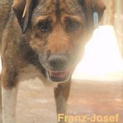 1 Tier in Rumänien durch Namenspatenschaft Franz-Josef, Pro Dog Romania eV