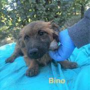 1 Tier in Rumänien durch Namenspatenschaft Bino, Pro Dog Romania eV