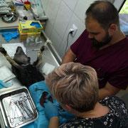 1 Tier in Rumänien über Suveava - Memory of Tina eV