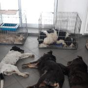 2 Tiere in Sibiu/Rumänien über Freie Tierhilfe eV