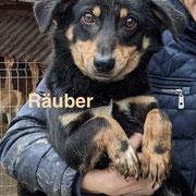 1 Tier in Rumänien durch Namenspatenschaft Räuber, Pro Dog Romania eV