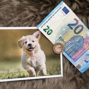 1 Hund in Rumänien über Pro Dog Romania eV