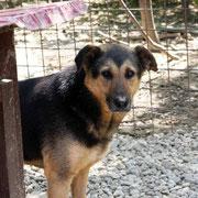 1 Tier in Rumänien durch Namenspatenschaft Henny Pro Dog Romania eV