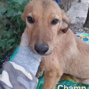 1 Tier in Rumänien durch Namenspatenschaft Champ, Pro Dog Romania eV