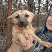 1 Tier in Rumänien durch Namenspatenschaft Kennedy Pro Dog Romania eV