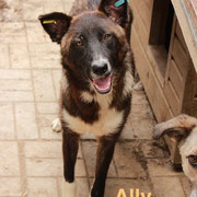 1 Tier in Rumänien durch Namenspatenschaft Ally, Pro Dog Romania eV
