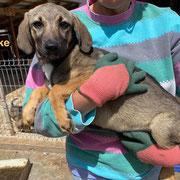 1 Tier in Rumänien durch Namenspatenschaft Mücke, Pro Dog Romania eV