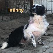1 Tier in Rumänien durch Namenspatenschaft Infinity, Pro Dog Romania eVc