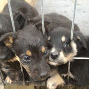 2 Hunde in Rumänien, Pro Dog Romania eV