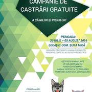 1 Tier in Sibiu/Rumänien über Freie Tierhilfe, Kleve
