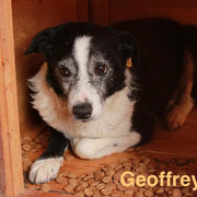 1 Tier in Rumänien durch Namenspatenschaft Geoffrey, Pro Dog Romania eV