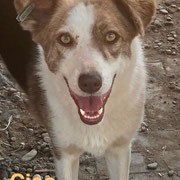 1 Tier in Rumänien durch Namenspatenschaft Ciao, Pro Dog Romania eV