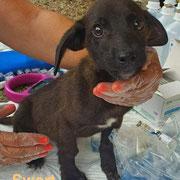 1 Tier in Rumänien durch Namenspatenschaft Swart, Pro Dog Romania eV