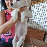 1 Tier in Rumänien durch Namenspatenschaft Angelita, Pro Dog Romania eV