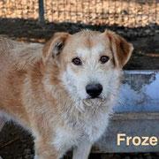 1 Tier in Rumänien durch Namenspatenschaft Frozen, Pro Dog Romania eV