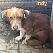 1 Tier in Rumänien durch Namenspatenschaft Indy, Pro Dog Romania eV