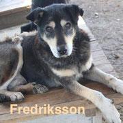 1 Tier in Rumänien durch Namenspatenschaft Fredriksson Pro Dog Romania eV